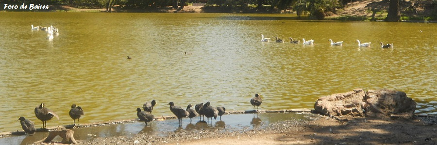 Sigue el censo de aves