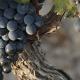 Catar Malbec: las 7 degustaciones que hay que seguir para llegar a ser un experto