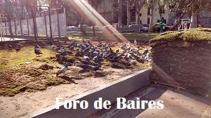 Palomas de la comuna