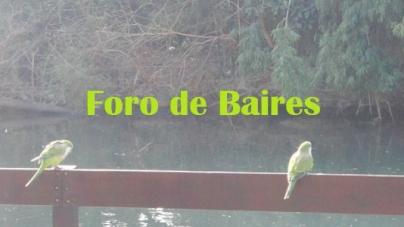 Los pájaros del Rosedal
