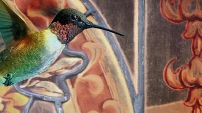 La mirada del colibrì