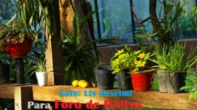 El Jardìn Botànico