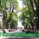 Los Tilos de la calle Honduras