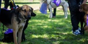 La ciudad realiza la última jornada de adopción de mascotas y concientización sobre el uso de pirotecnia