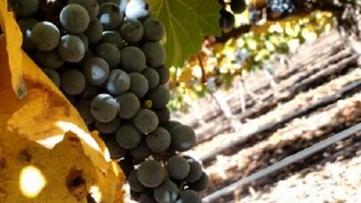 Vendimia 2018: ¿qué dicen los enólogos sobre el año en curso y qué esperar de los vinos?