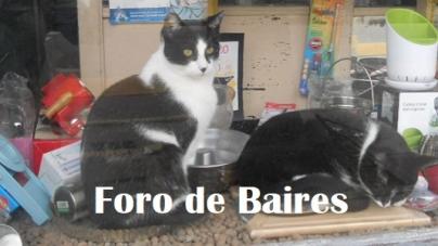 """Eventos en Audio con Folklore Class & International Peña, Mate Club virtual, Seminario Online """"Conviviendo con Gatos"""" y Tango para principiantes"""
