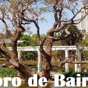 Día de los enamorados en el Puente Griego del Rosedal y en el sendero de los Reyes del Jardín Botánico
