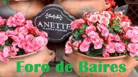 """""""Anette, Plants & Flowers"""" en el paquete Pasaje """"Paul French Gallery"""""""