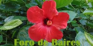 Una flor roja y atrevida perdida en mi barrio