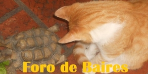 Eventos en Audio: Cuidado de mascotas, Cultura en Casa y Observaciones Covid-19
