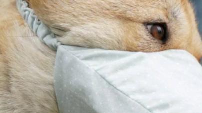 Coronavirus: murió el primer perro diagnosticado con la enfermedad