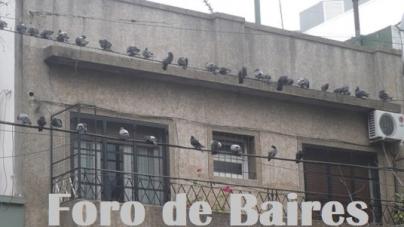 Por un momento me olvidé que hay cuarentena y casi salgo a pasear por Buenos Aires