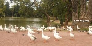 Recuento de aves acuáticas