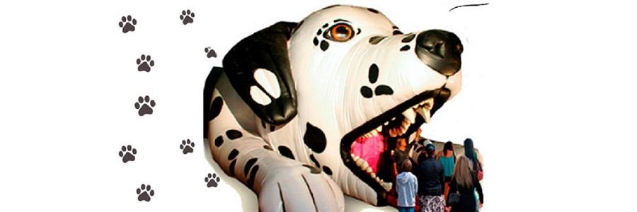 Foto Gentileza: Expo Cachogos