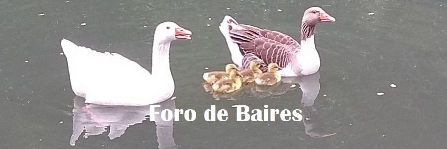 Los primeros Patitos de primavera-verano en el Parque Regatas