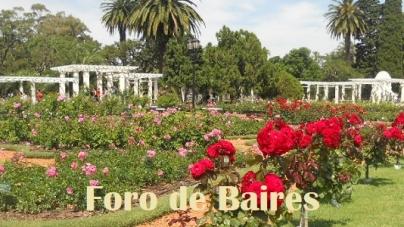 Comienza la Temporada de Poda de Rosas en la Ciudad