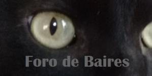El maltrato animal se puede denunciar de manera online