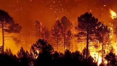 El Papa apeló al compromiso de todos para detener los incendios en el Amazonas