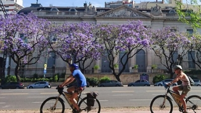 La Ciudad se llena de color con el florecimiento de los jacarandás