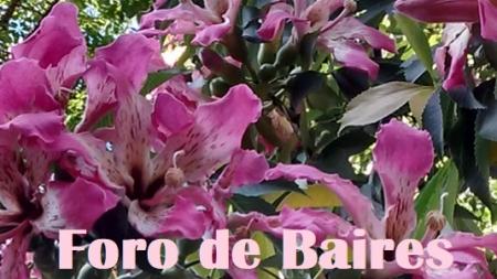 Las Flores de mi Plaza