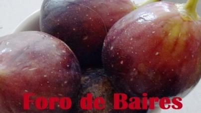 Los Higos, una de las frutas más ricas del verano