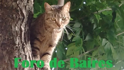 """Chica"", la gatita rebelde de la calle Gorriti y Palestina"
