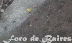 El trabajo incesante de las hormigas en cuarentena