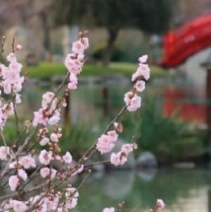 El Jardín Japonés ofrece muchas alternativas a sus visitantes para disfrutar del predio