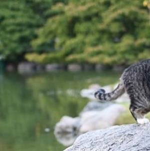 """Patitas"", la gatita del Jardín Japonés"