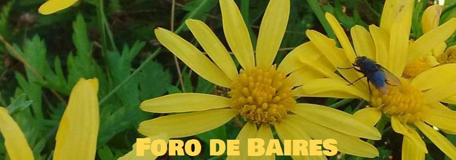 """L' Fleur """"Enamorarse"""""""