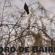 Cuarentena flexible en la Plaza Unidad Latinoamericana junto al canto de los pájaros