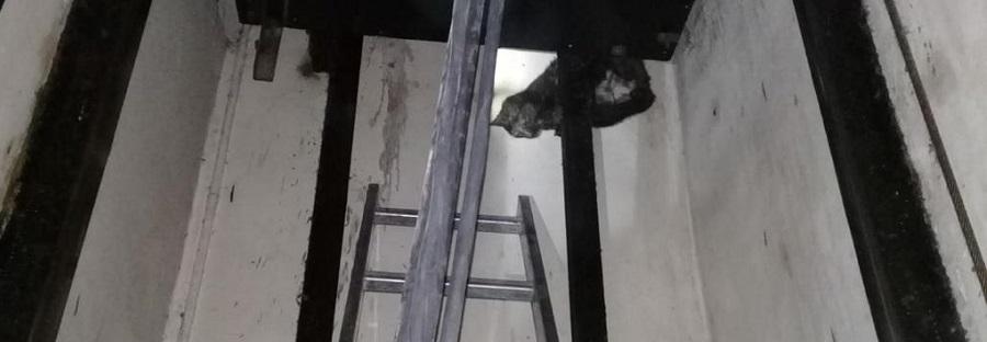 Rescataron a un gato que estaba atrapado en el hueco de un ascensor en un edificio en Palermo