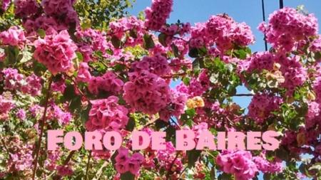 Rosada primavera en los pasajes palermitanos